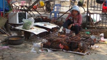 Vietnam 5 Hoi An Mar 17-25 2016 -- 508 market
