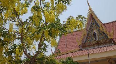 Thailand 2 Ayutthaya April 25-28 2016 -- 200