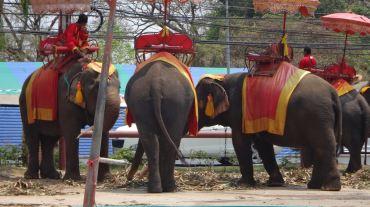 Thailand 2 Ayutthaya April 25-28 2016 -- 210