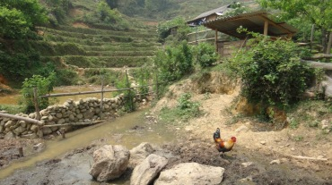 Vietnam 9 Sapa April 9-13 2016 -- Tour2 -- 17