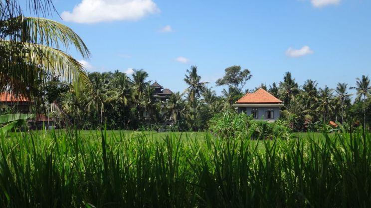 Bali Rice Fields - 10