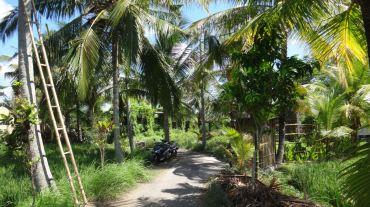 Bali Rice Fields - 11