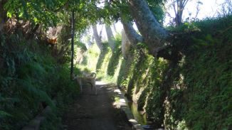 Bali Rice Fields - 12