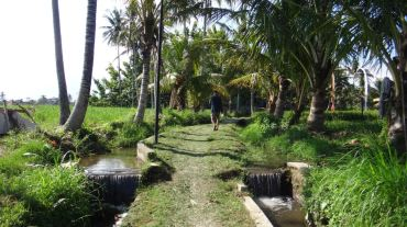 Bali Rice Fields - 14