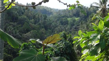 Bali Rice Fields - 16