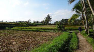 Bali Rice Fields - 17