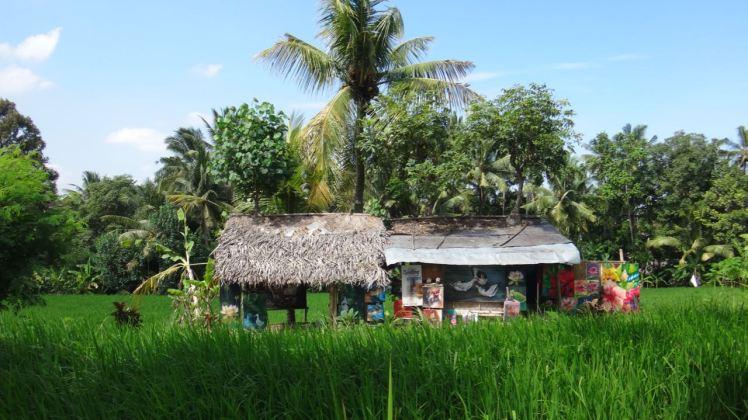Bali Rice Fields - 26