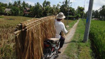 Bali Rice Fields - 29