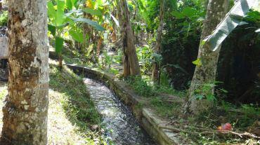 Bali Rice Fields - 3