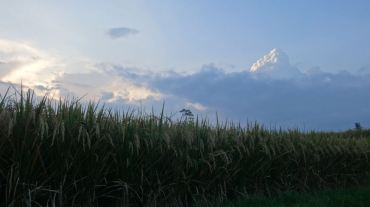 Bali Rice Fields - 33
