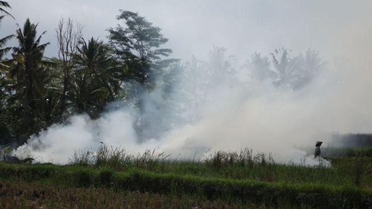 Bali Rice Fields - 36