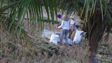 Bali Rice Fields - 39
