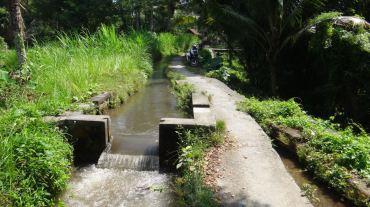 Bali Rice Fields - 4