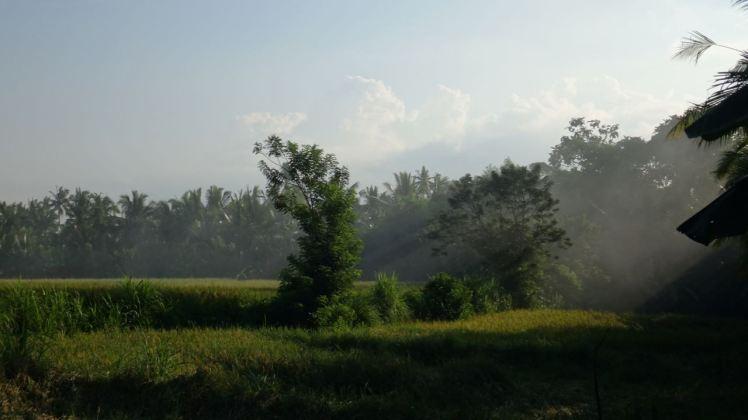 Bali Rice Fields - 40
