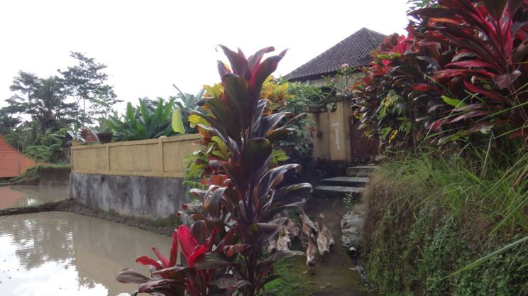 Indonesia Ubud Bali June 28-August 26 2016 - 382