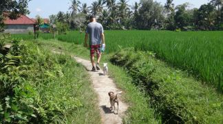 indonesia-ubud-bali-starting-june-28-2016-1145