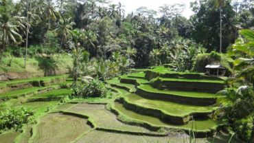 indonesia-ubud-bali-starting-june-28-2016-1325