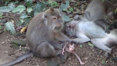monkey-forest-2